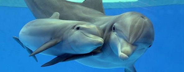 corsi biologia marina delfini